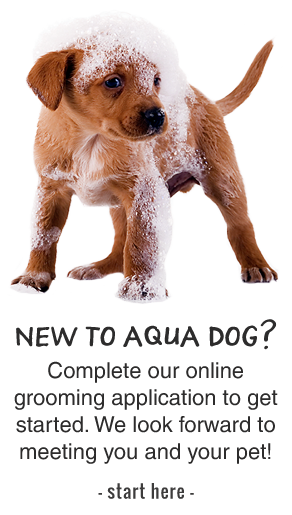 Aqua Dog Grooming Application